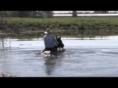Jonathan Field takes his stallion for a swim!
