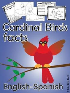 Cardinal Bird facts craftivity + worksheets for centers English-Spanish $2.00