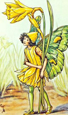 Daffodil Flower Fairy, Flower Fairies by Cicely Mary Barker £4.50