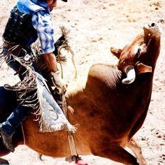 bull riders :)