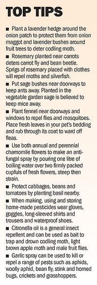 Herbs are useful in the garden...not just the kitchen.