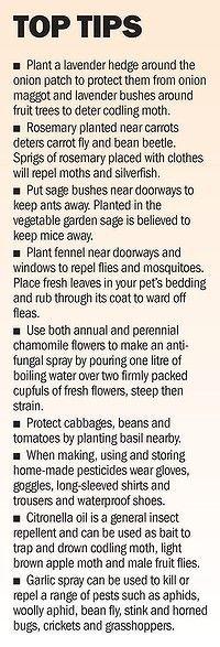Natural garden tips@Linda Spencer Ellis