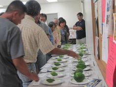 Hawaii Papaya Workshop: Effects of surfactants on spray coverage