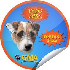 Dog Vs. Dog on GMA on May 4! Sticker | GetGlue