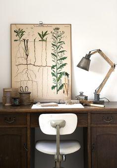 vintage desk and botanical print poster