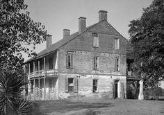 Old Louisiana Plantation- Live Oak
