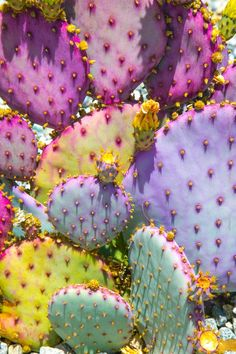 hello purple prickly