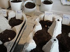 eggs, toilet paper rolls, seed starting, egg cartons, planting seeds, green life, indoor gardening, cardboard tubes, kid