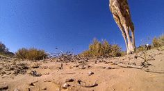 Giraffe kicks over camera, shows you a view you have probably never seen of the animal.