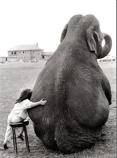 579x778, 105 Kb / ч/б, слон, девочка, друзья