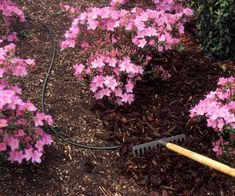 If you haven't already, check that you have 1 to 2 inches of mulch in your flower beds to help plants conserve moisture during hot summer months. | Photo: Peter Anderson/Dorling Kindersley/Getty