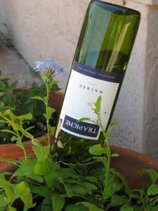 Reuse a wine bottle as a plant watering system.