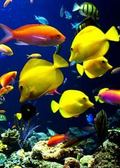 Mundo marino on pinterest angelfish sea slug and - Peces tropicales fotos ...