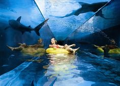 Atlantis, The Palm, Dubai-21 Photos of Amazing Snaps The Best Suites and Restaurants in the World