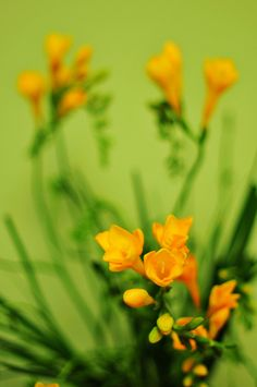 freesias.one can never tire of fresh #flowers ... Follow #Labola.co.za for mor tips and trends
