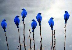 bluebird, stick, color blue, art, beauty, birds, feather, electric blue, flower
