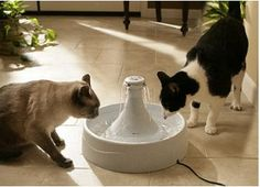 This is a neat way to keep your pets hydrated.