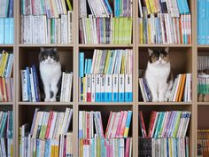 """How Do U File 'Em In The Dewey Decimal System??"" Thing One and Thing Two are the cats' names"