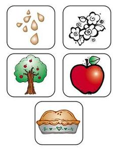 Life Cycle of an Apple {FREEBIE} - Wild About Teaching - TeachersPayTeachers.com