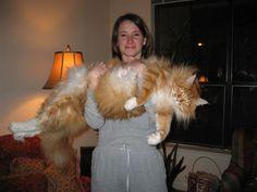 Giant Cat. Woah.