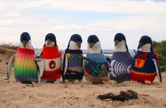 Penguins in sweaters--not only adorable but life-saving to penguins caught in oil spills.