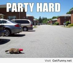 red, cups, funny pictures, funni, parties, beaver, parti hard, hello kitty, the road