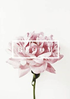graphic design, pink flowers