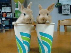 Today's Special: Cup O Bunnies