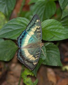 A species endemic to Taiwan