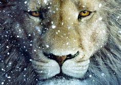 ASLAN the LION CHRONICLES OF NARNIA Photo Poster Print Art