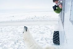 Churchill, Manitoba, Canada  ( Far northern part of the province )