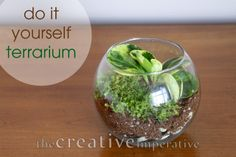 How to make your own glass terrariums {the creative imperative}