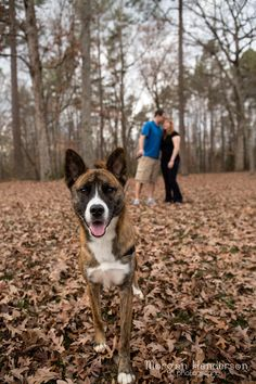 5 tips for Engagement photos with dogs http://morganhendersonphotography.com/dogs-in-engagement-photos-tips/