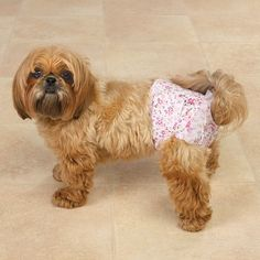 Female Dog Incontinence Natural Treatment