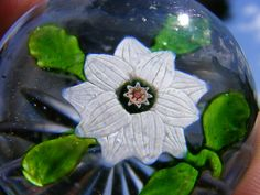 Baccarat 'Clematis' 1850s glass paperweight european paperweight, glass paperweight, baccarat paperweight, glass galor