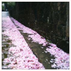 brinjal - fallen blossom
