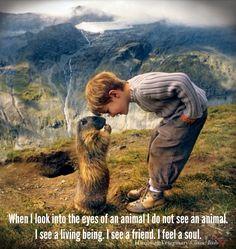 Animal love ❤ beauti anim, anim quot