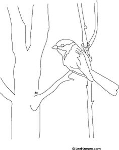 Printable nature coloring page for adults, chickadee