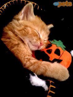Halloween Pets in Costume : People.com