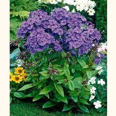 Google Image Result for http://www.lyndegreenhouse.com/_ccLib/image/plants/DETA-915.jpg
