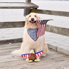 #holiday #dog #july4th #memorialday #laborday