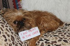 Dog Shaming - Hidden Meat
