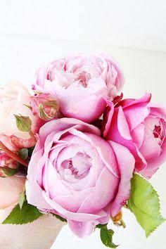 Gorgeous pink peonies