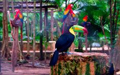 Did you know that Xcaret is home to more than 24 species of tropical birds?