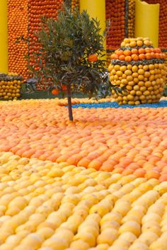 """There is a lemon festival in the city of Menton. Located on the French Riviera, it's known as the """"Pearl of France"""" and has quite a bit to offer! world festivals, france festival, beauti, menton, travel, place, colored lemons, french riviera, lemon festiv"""