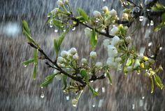 Rainy day #rainyday