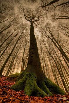 Majestic tree.