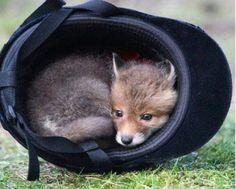 The perfect hiding spot.