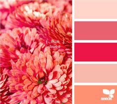 color palett, color schemes, pink coral, paint schemes, colour pallet, bathroom, summer colors, coral color pallets, mum hue