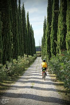 Biking along Cypress-lined lanes in #Tuscany with VBT. #Italy